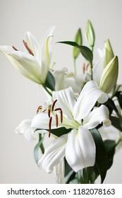 oriental lily bulbs
