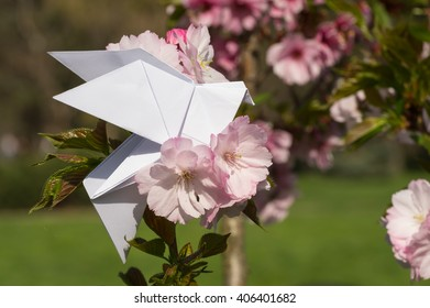 Origami dove on blooming spring japanese cherry tree sakura