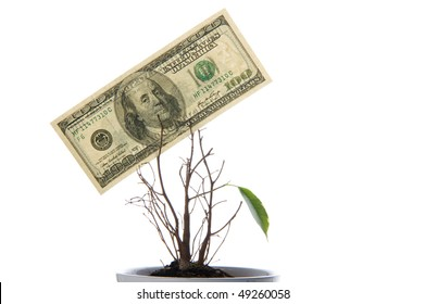 Origin of a new life. A lonely green leaf and hundred dollars isolated on white