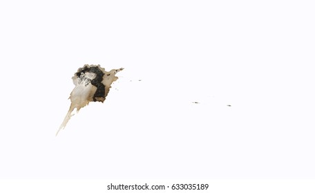 Original bird droppings on white background isolated.