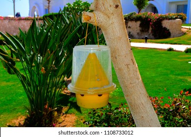 The original ecological trap for flies of yellow plastic hangs on a tree against a background of greenery and a blurry white building.