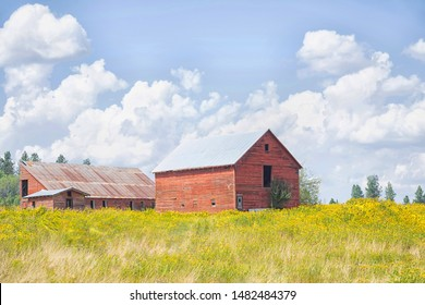 Original photograph of an old red barn in a field of yellow Yarrow wildflowers with billowing clouds
