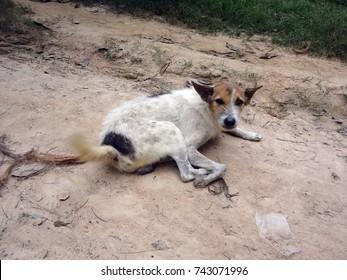 Original Thai dog relax on earth.