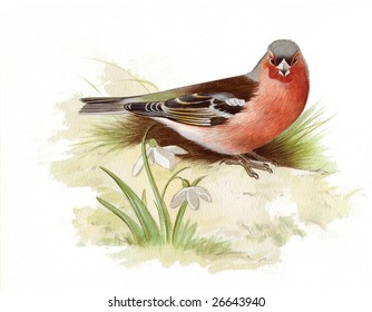 An original watercolor painting (by myself as the artist) of a Chaffinch.
