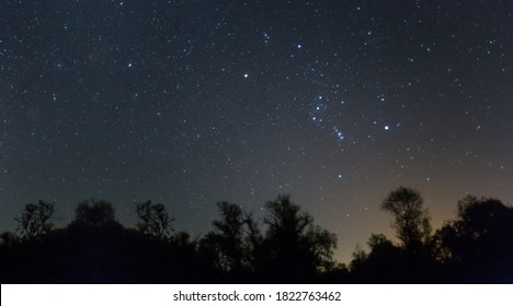 Orion constellation above a night forest silhouette, night starry sky scene