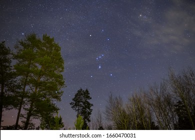 Orion constellation on a night sky above forest, night outdoor scene
