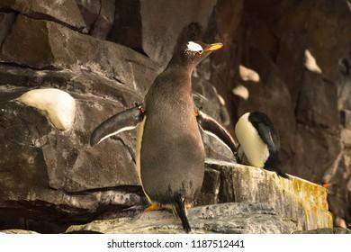 TOY N Pororo the Little Penguin Pororo Town Series Safari Zoo