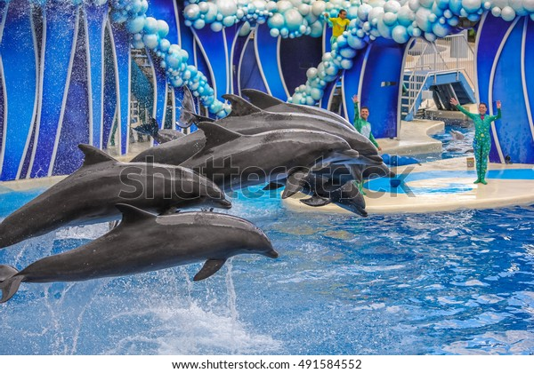 Orlando, Florida, United States - April 22, 2012: group of dolphins jumping together in Azul Show at Seaworld. Seaworld is an animal theme park, oceanarium and to a marine mammal park.