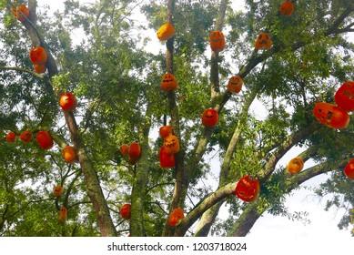 Orlando, FL/USA - October 9, 2018: Halloween pumpkins in trees at Universal Studios