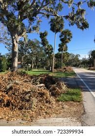 ORMOND BEACH, FLORIDA/ USA – SEPTEMBER 27, 2017: Weeks after Hurricane Irma passes through, yard debris lines the streets.