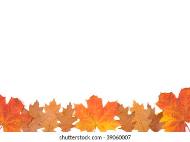 Ornament from autumn leaves of different colour, from different trees.