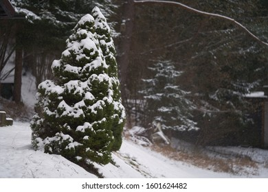 Ornamental evergreen tree Picea glauca conica on a mountain meadow. Snow covered conifer in the forest. Falling snowflakes in the background.