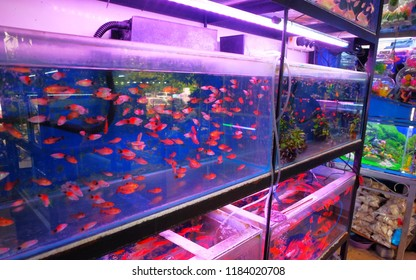 ornamental fish market