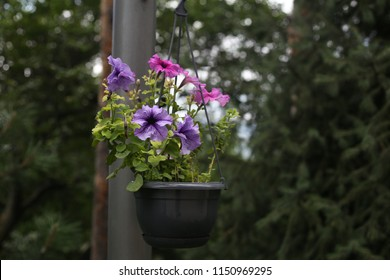ornamental flowerpot with flowers, hanging on the column in garden