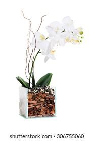 Ornamental flowerpots Orchid