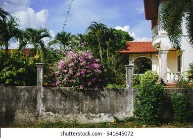 ornamental foliage on the fence