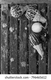 Ornamental gourds with fall leaves on a rustic wooden bench with copy space - monochrome processing