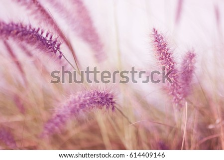 Ornamental Grass Flowers Field Background Color Stock Photo Edit