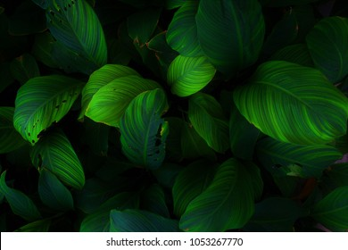 Ornamental leaves in green and black and shows the dark side of natural concepts.