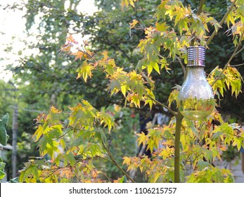 Ornamental light bulb decoration hanging in a maple tree.