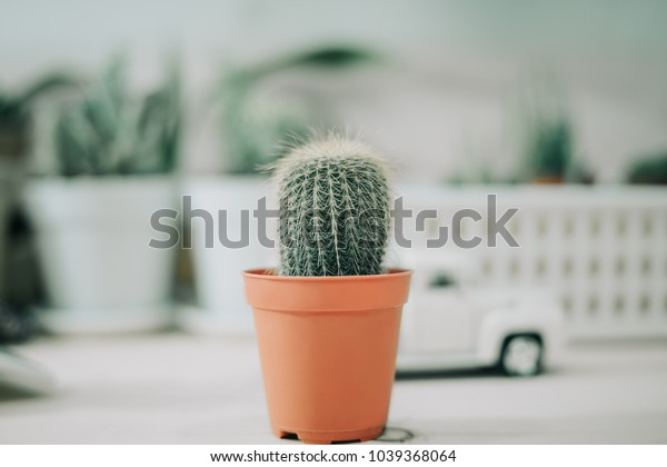 ornamental plant background closeup cactus in brown vase with model car and copy space. image for nature, defocus, flower, nobody, summer, garden, botany concept