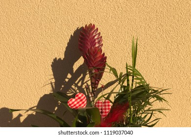 Ornamental plant with red flowers and two hearts (Pesaro, Italy)