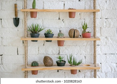 Ornamental plants hanging at wall in house