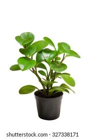 Ornamental plants on white background