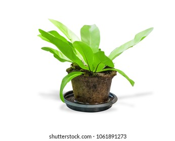 Ornamental plants in pot and spout,isolated on white background with clipping path.