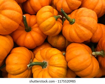 ornamental squash on the market