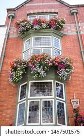 Ornamental Street Flowers - Dublin Ireland