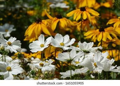 Ornamentals plants in a garden