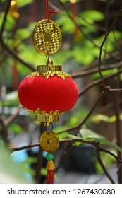 Ornaments are hang on an apricot tree in Saigon. The tree with yellow flowers are symbol for Tet holidays in the Southern Vietnam. While in the Northern, the cherry blossom is lunar new year symbol.
