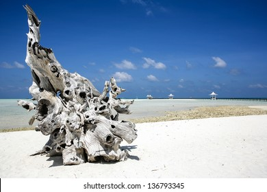 Ornate piece of driftwood on a deserted beach in the Meemu Atoll, Maldives. Blue sky, white sand and clear warm water.