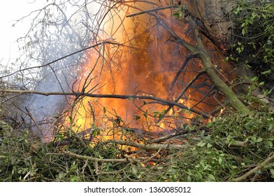 Orne, France, féb 2009. Burning of green waste, branches and hedges by a Farmer. Fire and emission of smoke.