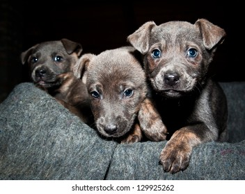 Orphan pups wait for a new life