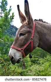 Orsiera Park, Piedmont Region, Italy: a donkey free in the park