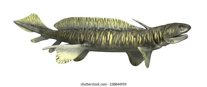 The Orthacanthus was a prehistoric shark that lived during the Devonian and Triassic Periods - 3d render.