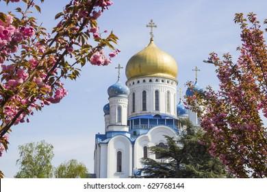 Orthodox Cathedral of Christ the Savior with sakura spring blossom in Uzhgorod, Ukraine