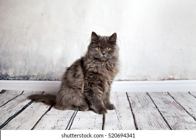 ortrait Of Longhair Persian Cat