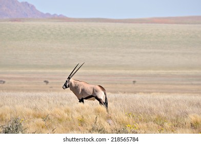 Oryx in grass and mountain landscape in the Namib Desert