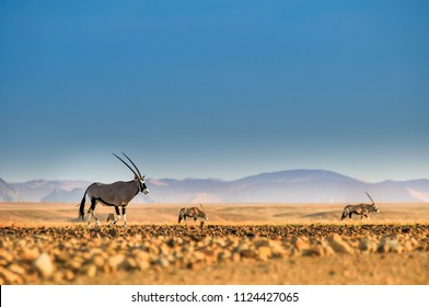 Oryx on a plain in Namibia