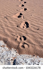 Oryx track in red desert sand during the morning