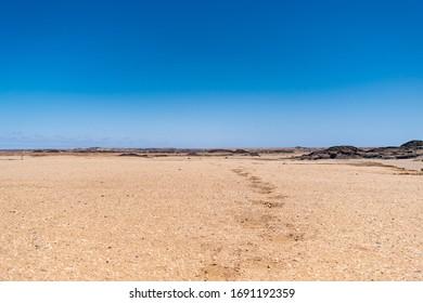 Oryx tracks across the Skeleton Coast