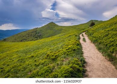 Osadzki Wierch mountain on the Wetlina hiking trail in Bieszczady National Park, Subcarpathian Voivodeship of Poland