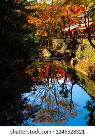 osaka - 25 Nov 2018: Minoh park in autumn with red leaves tree / lake / osaka , japan