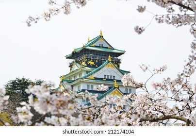 Osaka Castle and Cherry Blossoms blooming in Osaka city, Japan.