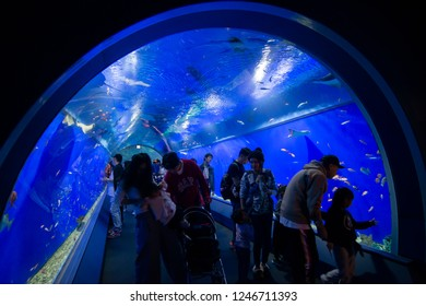 Osaka Japan 21 Oct 2018 : Many tourist from around the world visiting Osaka aquarium or Kaiyukan located in the ward of Minato in Osaka, Japan. It is one of the largest public aquarium in the world.