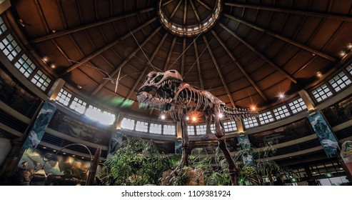 Osaka, Japan - December 08 2016, Jurassic Park T-rex dinosaur skeleton fossil model display at Universal Studios Japan.