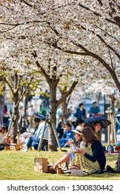 Osaka / Japan - March 28th 2018: Girls picnicking under cherry trees, enjoying the view of cherry blossom sakura season